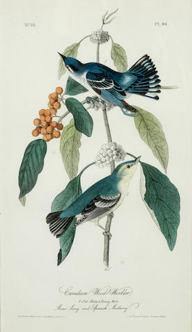 AUDUBON, JOHN JAMES. 1785-1851, after. A group of 19 studies of birds, from a Bowen 8vo edition of The Birds of America (Philadelphia: 1856-1871).
