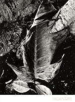Brett Weston, Selected Images of Hawaii;