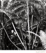 Brett Weston (American, 1911-1993); Selected Images of Hawaii; (4)