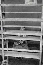 Elliott Erwitt (American, born 1928); Managua, Nicaragua;