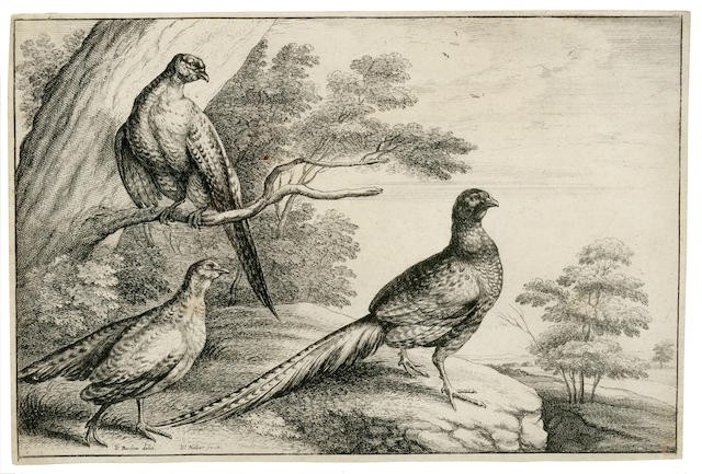 BARLOW, FRANCIS. C.1626-1704, after. 3 etchings of birds by Wenceslaus Hollar after Barlow,