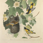 After John James Audubon (American, 1785-1851); Baltimore Oriole (Pl. XII);