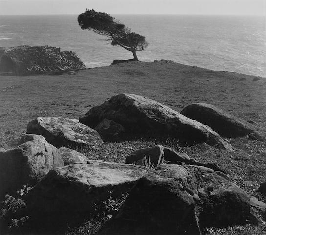 Ansel Adams (American, 1902-1984); At Timber Cove, North Coast, California;