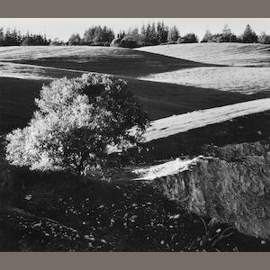 Ansel Adams (American, 1902-1984); Rolling Hills, Campus of the University of California, Santa Cruz;