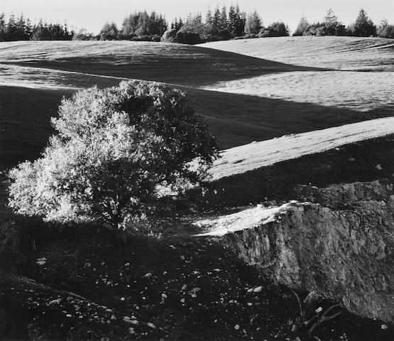 Ansel Adams (American, 1902-1984); Rolling Hills, Campus of the University of California, Santa Cruz;
