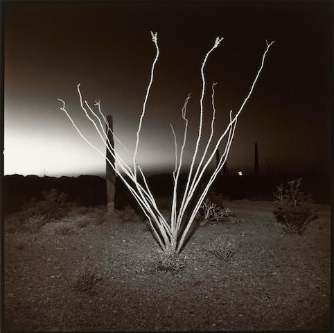 Richard Misrach (American, born 1949); Ocotillo #1, Arizona;