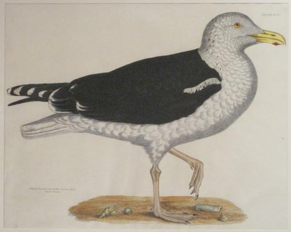 ORNITHOLOGY. A group of 6 hand-colored engravings of birds and one chromolithograph,