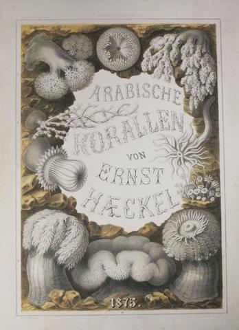 CORALS. HAEKEL, ERNST. Arabische Korallen. Ein Ausflug nach den Korallenbänken der Rothen Meeres. Berlin: Georg Reimer, 1876.