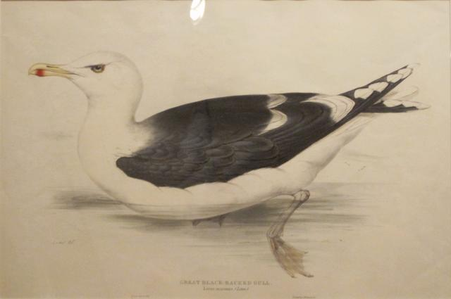 GOULD, JOHN. 1804-1881. 5 plates from various works,