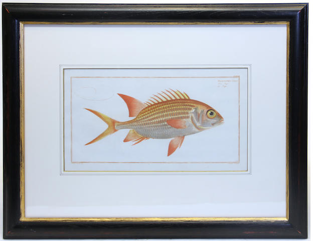 A group of seven Bodenehr and Ludwig Schmidt fish prints