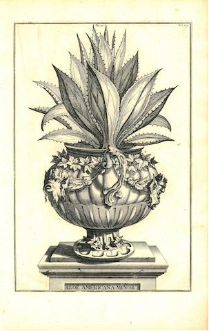 BOTANICALS. [MUNTING, ABRAHAM. 1626-1683.] Group of 24 botanical engravings