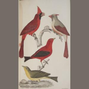 WILSON, ALEXANDER. 1766-1813. American Ornithology. London: Whittaker, 1832.