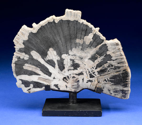 Half Slab Of Petrified Wood On Stand