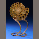 Fossil Ammonite on Stand by Rick Gregg