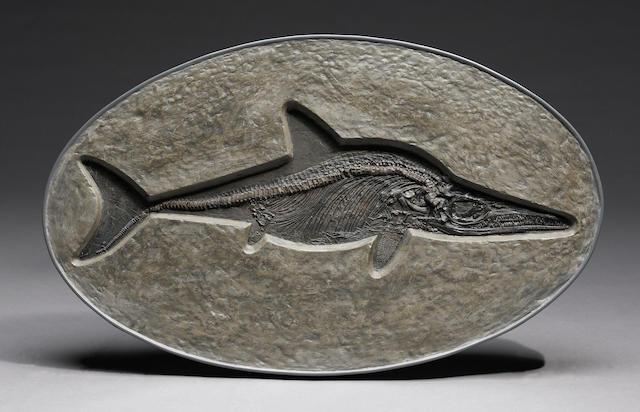 English Ichthyosaurus Communis