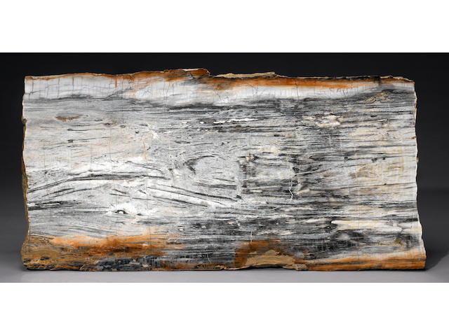 "Petrified Wood Slab 63""X32"" B+W"