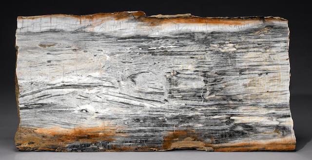 "Petrified Wood Slab 63""X32"" B+W"