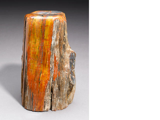 "Petrified wood log - 20"" X 10"""