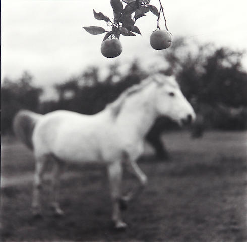 Keith Carter (American, born 1948); Orange Tree;