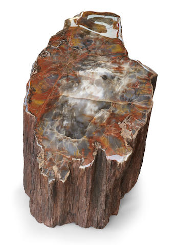 Elongated Petrified Wood Specimen