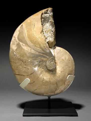 Calcite/Marble Ammonite, Dover, England