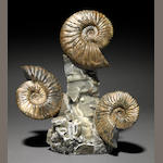 Triple Ammonite Cluster, Irridescent