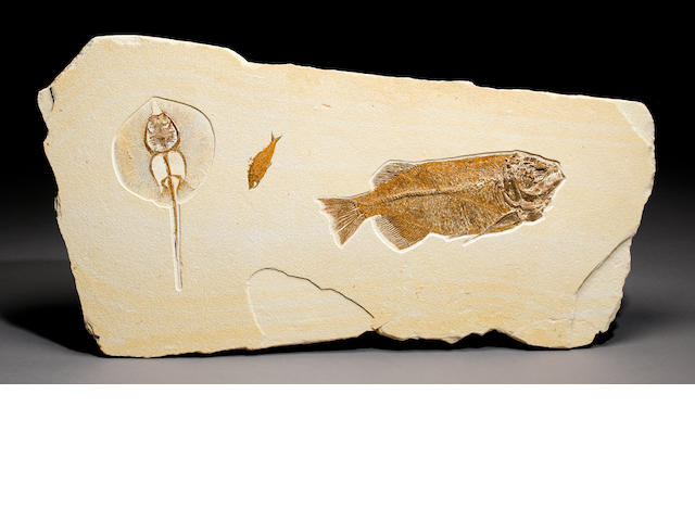 Stingray & fish fossil mural