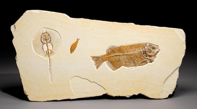Stingray & fish fossil mural