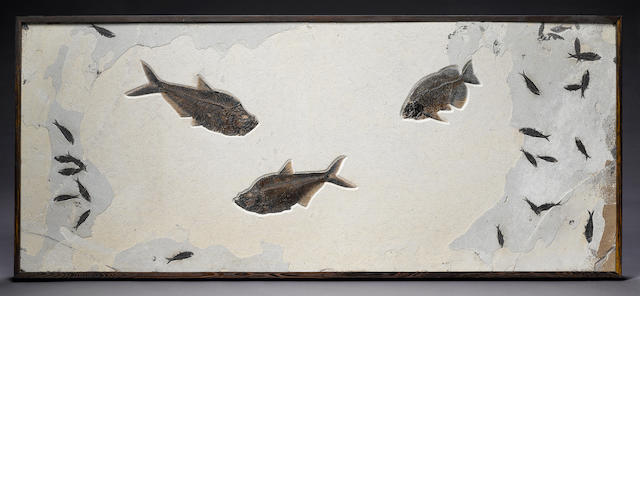 Large multiple fish mural