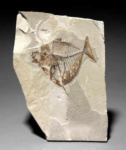 Rare European Fish