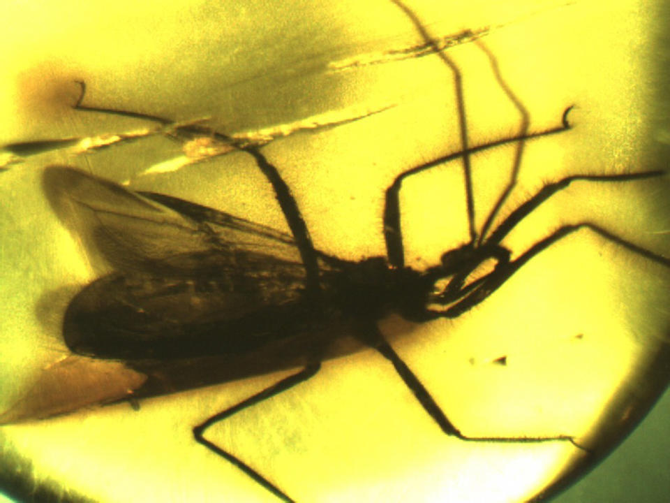 Assassin Bug in Amber Cabochon