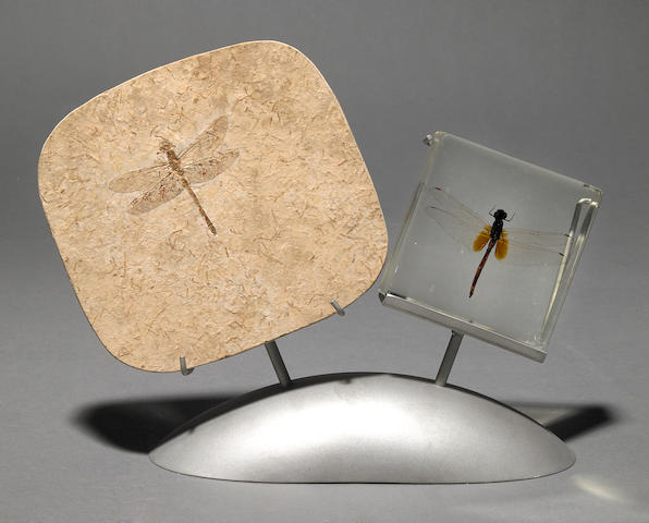 Fossil Dragonfly and Modern Dragonfly