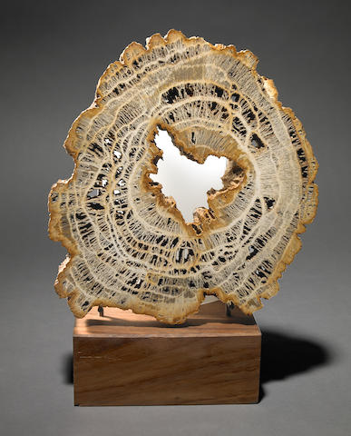 Petrified wood disc as lamp