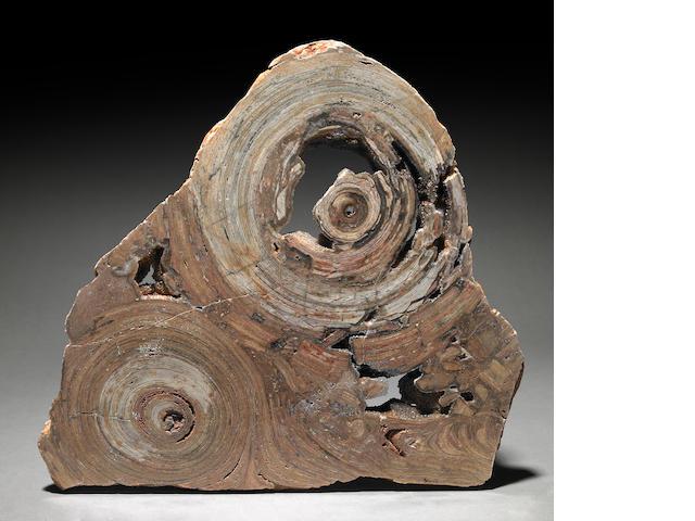 Stromatolite Slab