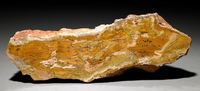 Oldest Stromatolite in World
