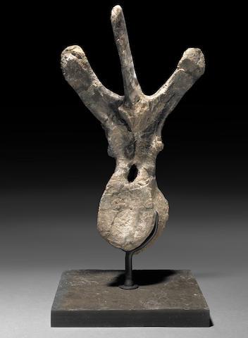 Ceratopsian vertebrae
