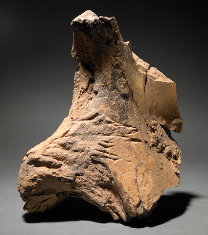 Exceptional Dinosaur Bone with Bite Marks