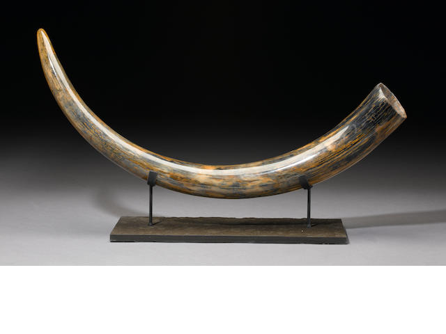 Blue Mammoth Tusk