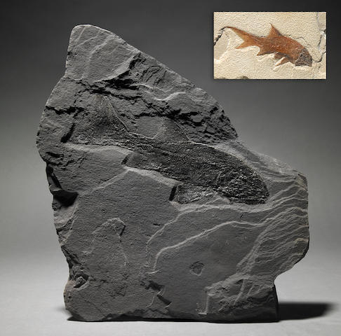 Two Paleozoic Fossil Fish