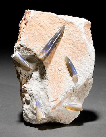 Opal Belemnites on Matrix