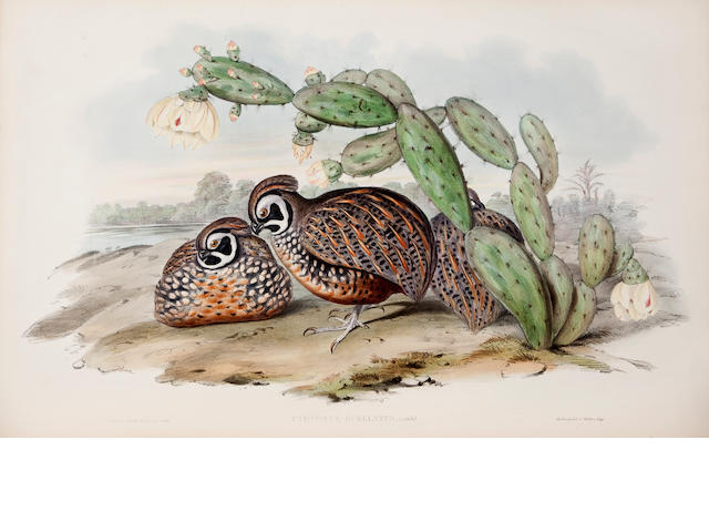 GOULD, JOHN. 1804-1881. A Monograph of the Odontophorinae, or Partridges of America.  London: Richard & John E. Taylor for the Author, [1844-]1850.