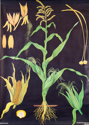 Botany Print with corn