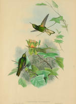 After Gould and Richter; (Publisher) A Group of 3 Hummingbird Prints; (3)