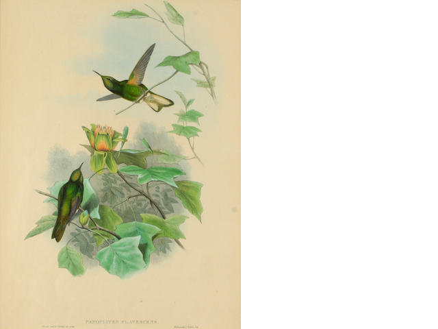 After Gould and Richter; A Group of 3 Hummingbird Prints; (3)
