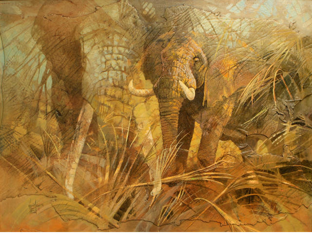 Kobus Moller (African Up Close (Two Elephants) 35 x 48in