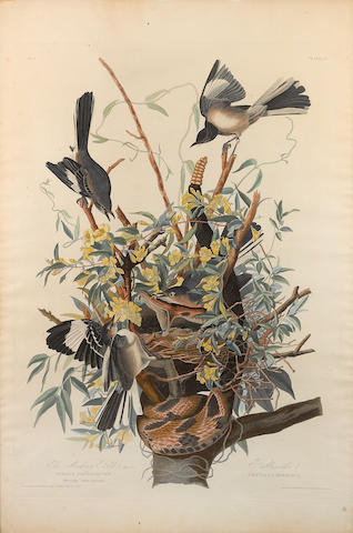 John James Audubon (American, 1785-1851), after. The Mocking Bird (Pl. 21);