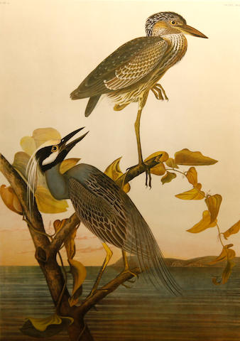After John James Audubon (American, 1785-1851); Yellow-Crowned Heron (Pl. CCCXXXVI);