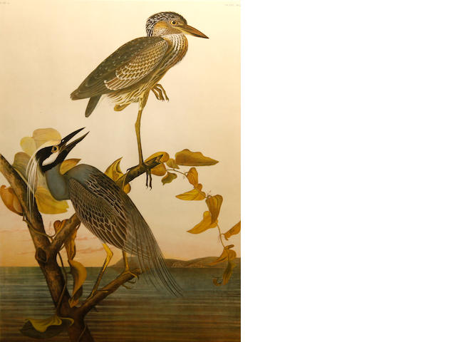 "John James Audubon ""Yellow Crown Heron"" by J. Bien NY 1860 plate 364"