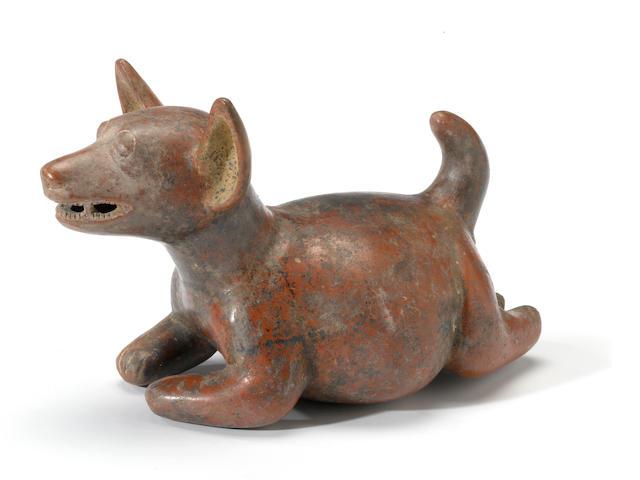 A Colima dog