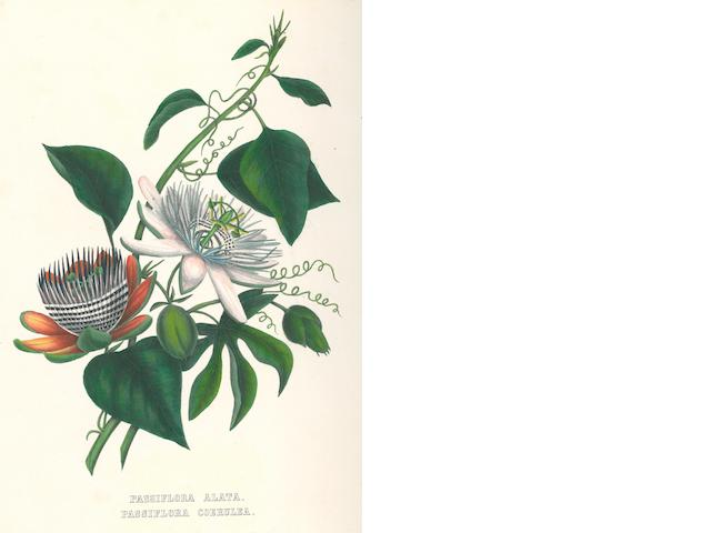 [HOPE, ANNE FULTON. 1809-1887.] Flowers from an Indian Garden. Dusseldorf: Executed by Arnz & Co., [1846].